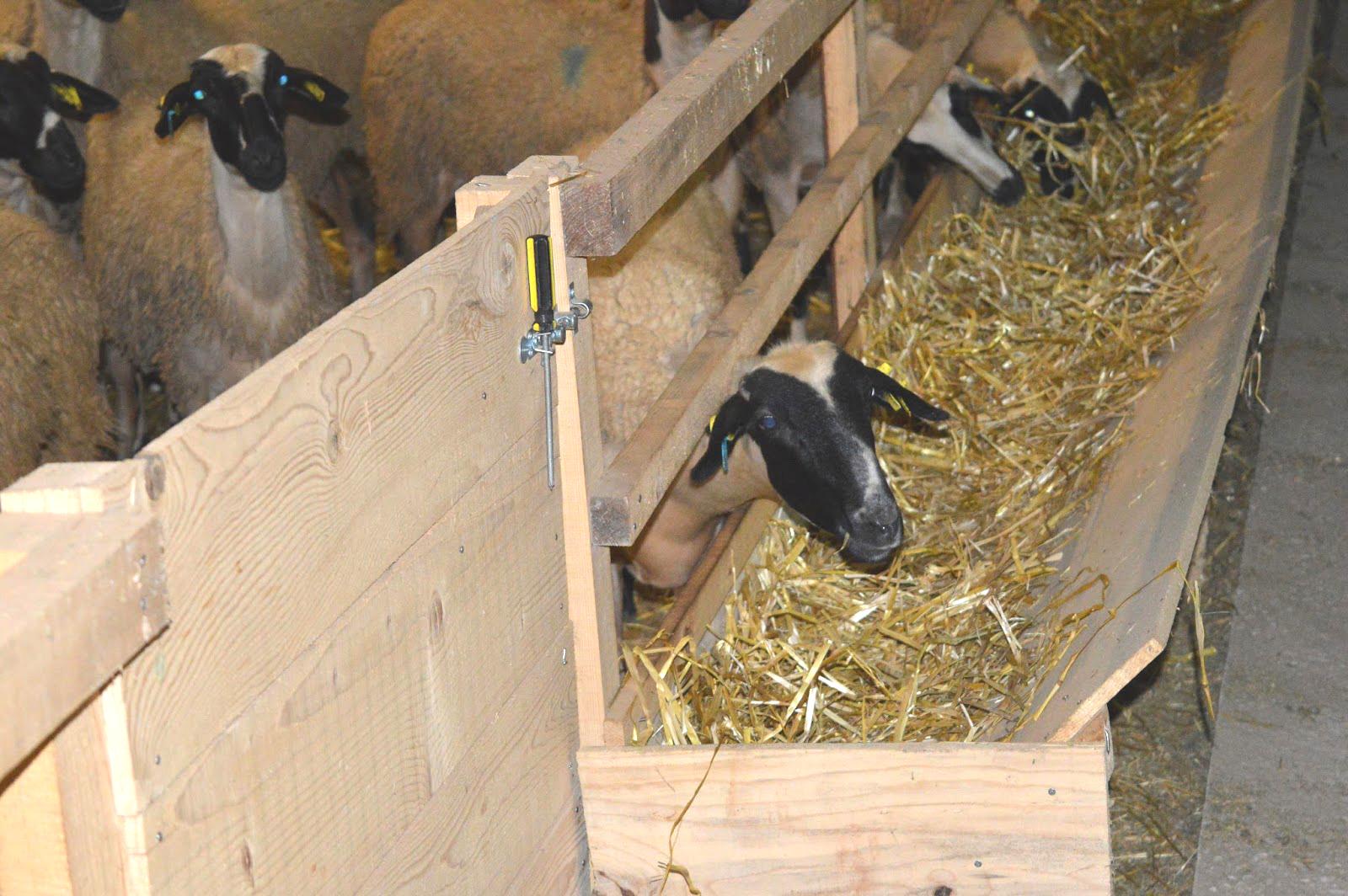 Μείωση ΦΠΑ: Ανάμεικτες αντιδράσεις στους Κτηνοτρόφους στην Θράκη