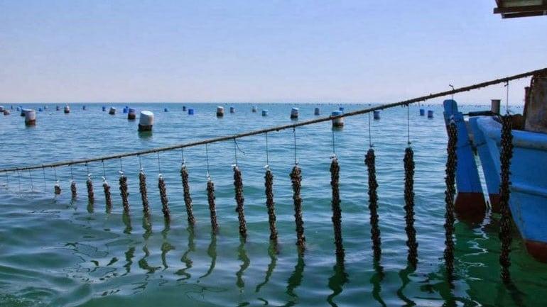19,5 εκ ευρώ και πλέον για την αναβάθμιση των υποδομών στη λίμνη Βιστωνίδα