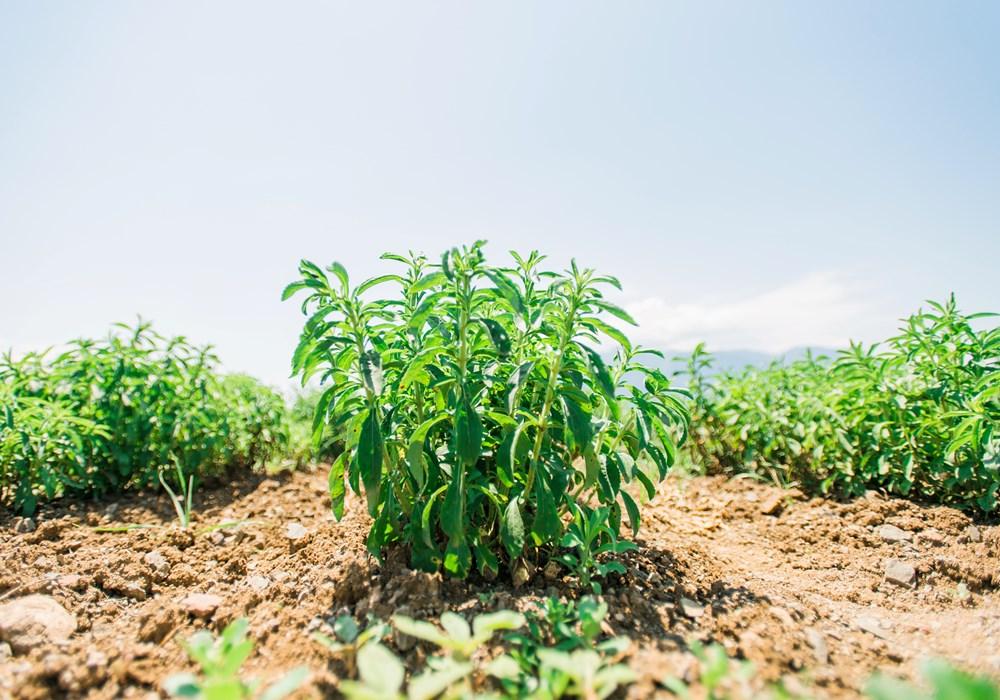 Νέα γη: Ένα ακόμη βήμα στη στρατηγική Βιώσιμης Ανάπτυξης της Παπαστράτος